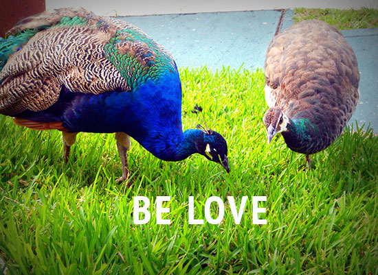 Be-Love